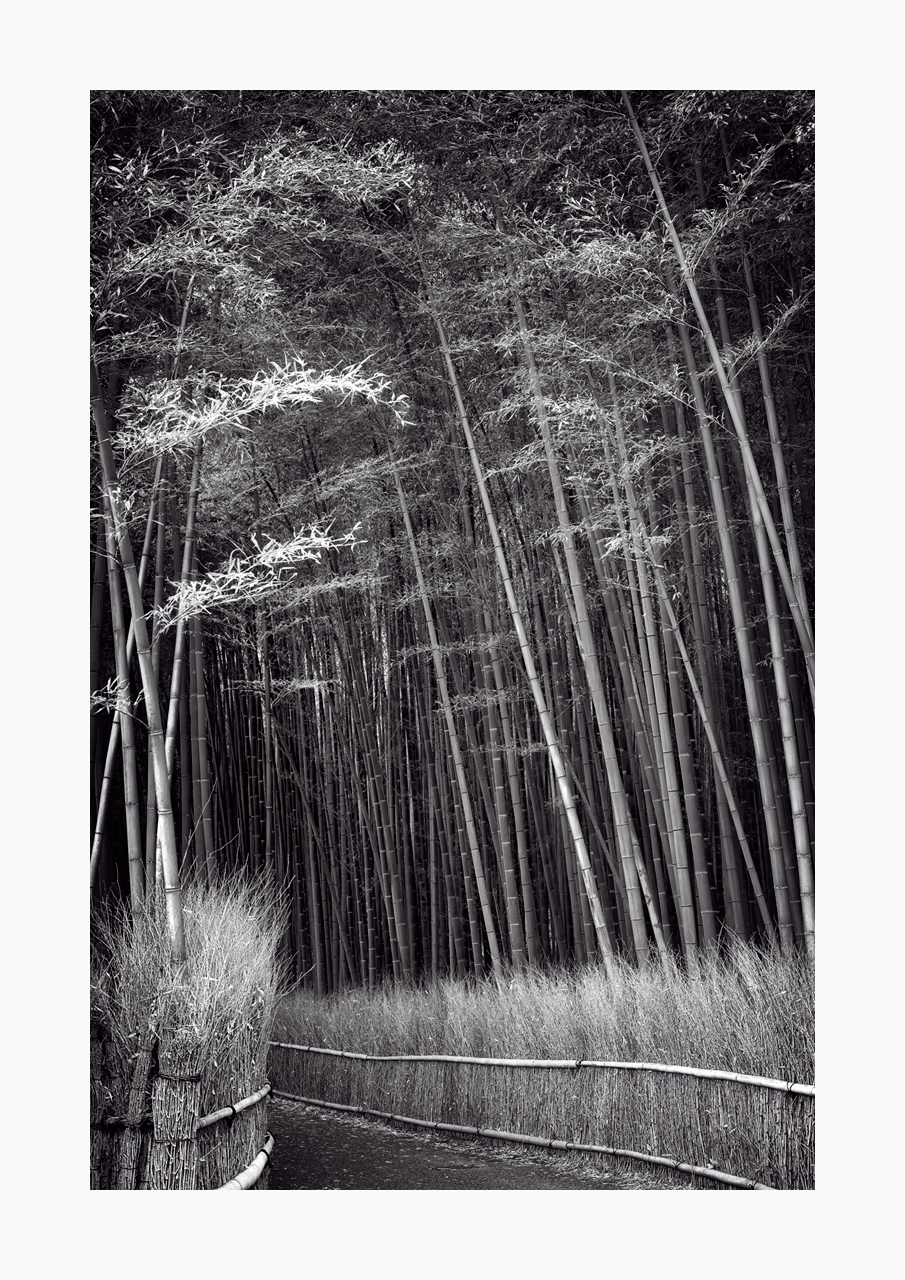Fine art black and white image of the Arashiyama Grove in Kyoto, Japan.