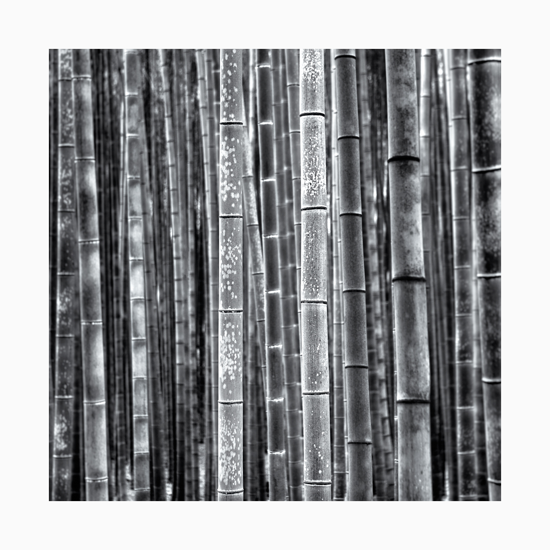Fine art black and white image of bamboo at the Arashiyama Grove in Kyoto, Japan.