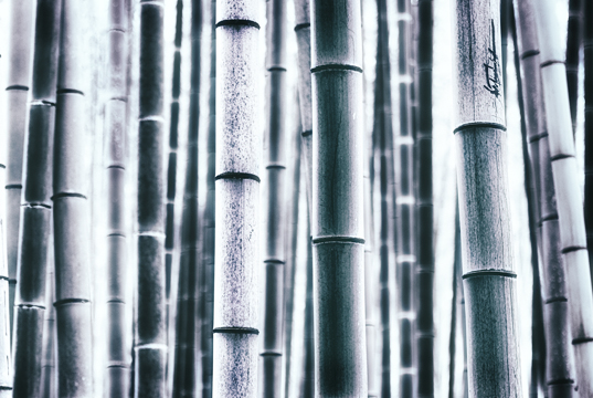 Link to Bamboo gallery.