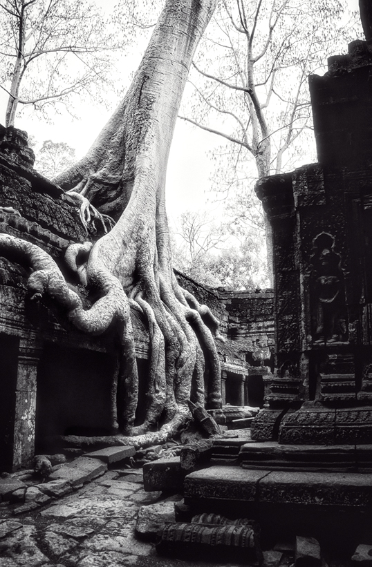 Link to image of Central Sanctuary of Ta Prohm I, 1993, Siem Reap