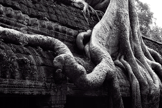 Link to image of Central Sanctuary of Ta Prohm II, 1993, Siem Reap