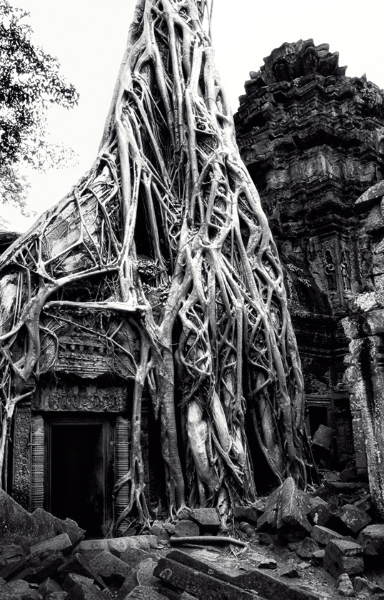 Link to image of Inner Sanctuary Tree and Door, 1993, Ta Prohm, Siem Reap