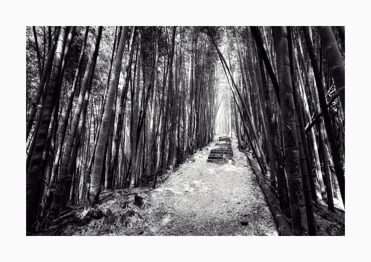 Fine art black and white image of a path in Alishan, Taiwan lined with bamboo at both sides.