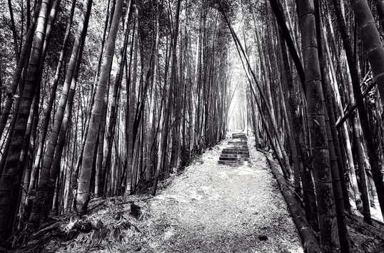 Link to Alishan path with surrounding bamboo image.