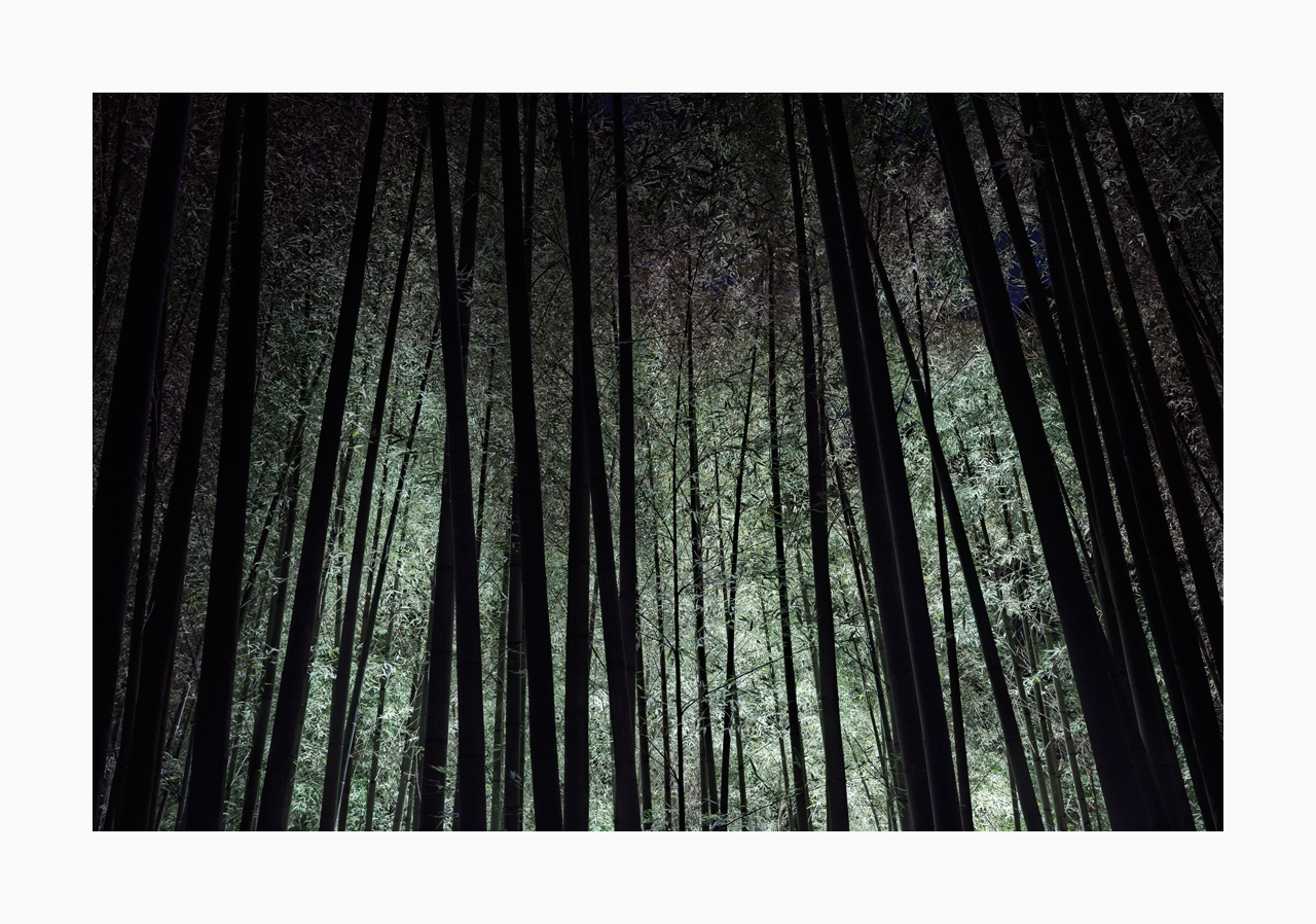Fine art image of a lighted bamboo grove at night in Kumamoto, Japan.