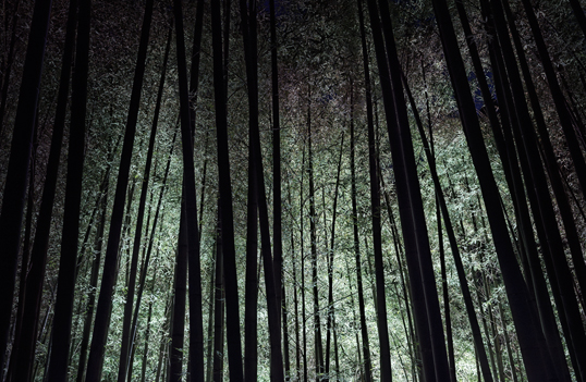 Link to lighted bamboo grove at night image.