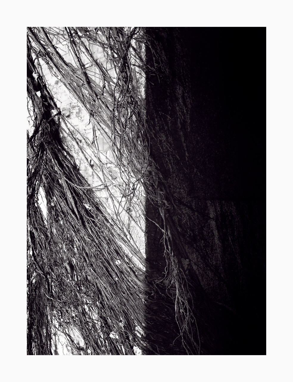 Fine art black and white image of roots covering a pillar