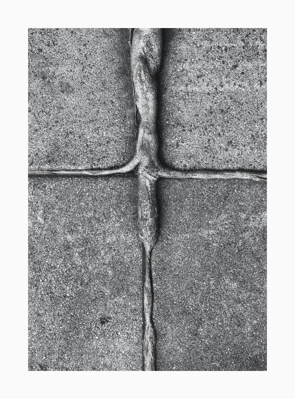Fine art image of tree root growing on concrete pavement in the shape of a cross.