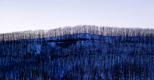 Winter Landscape of Trees Triptych 3